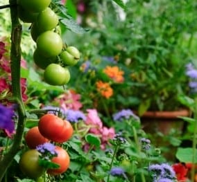 How to Grow Vegetables – When You Don't Have Time or Space for a Garden