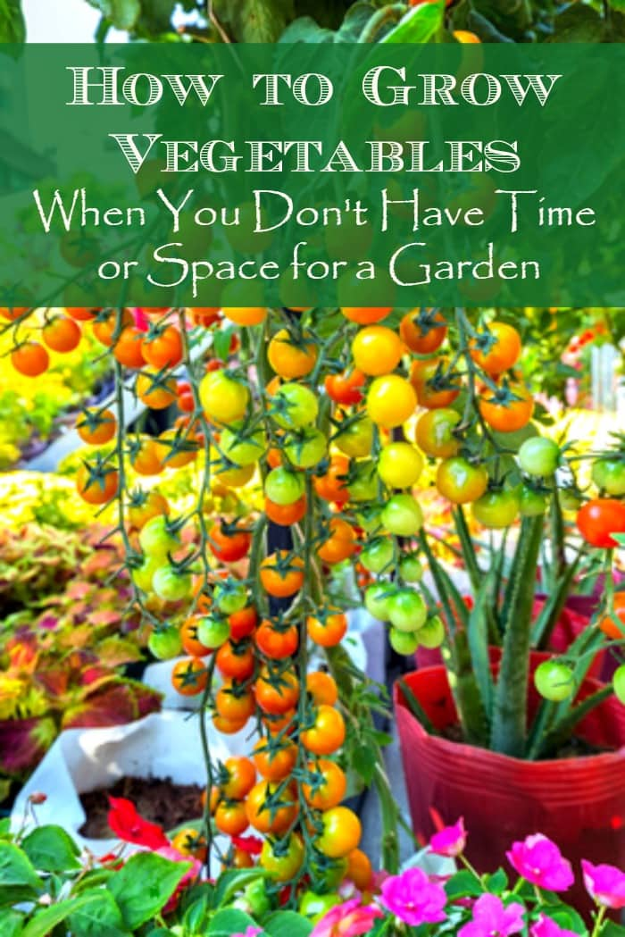 How to grow vegetables - when you don't have time or space for a garden. | Real food | Container gardening | Healthy diet